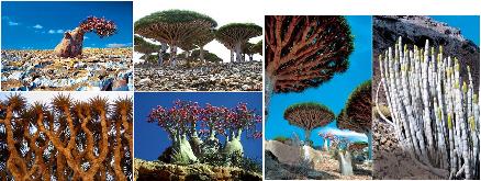 ソコトラ島の画像 p1_2
